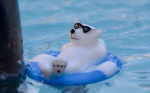 polar plunge event