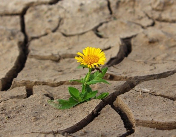 a flower in a dry desert scene