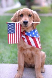 dog with flag in mouth and on bandanna